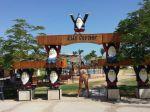 the-desert-rose-resort